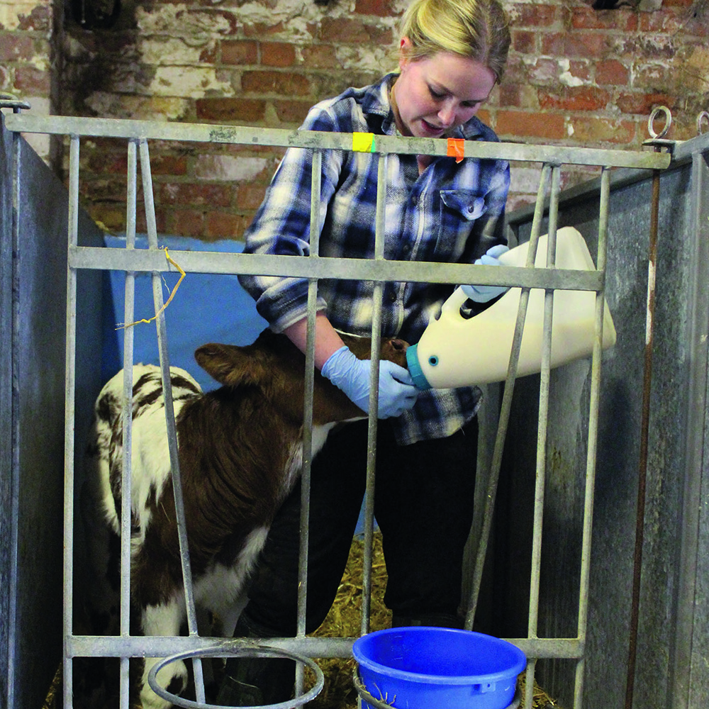 Colostrum Management has knock on effect