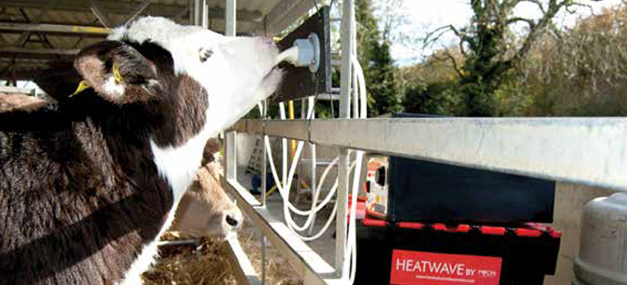 "Why are calves different to babies? - Encouraging discussion on ad-lib feeding in a New Zealand ""Dairy Focus"" journal."