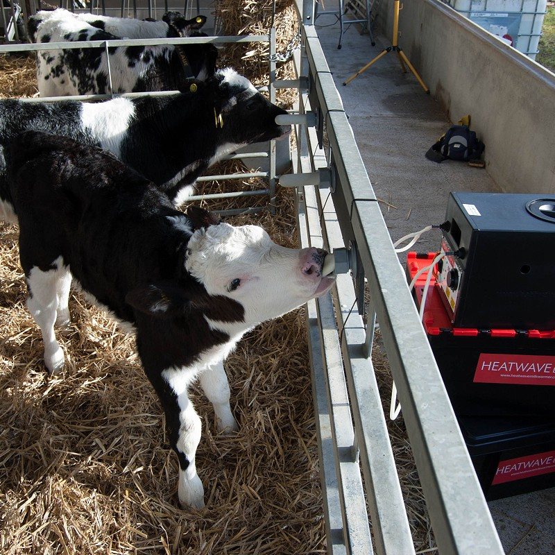 Ad-Lib Milk Warming System Could Help Meet New Calf Rearing Rules